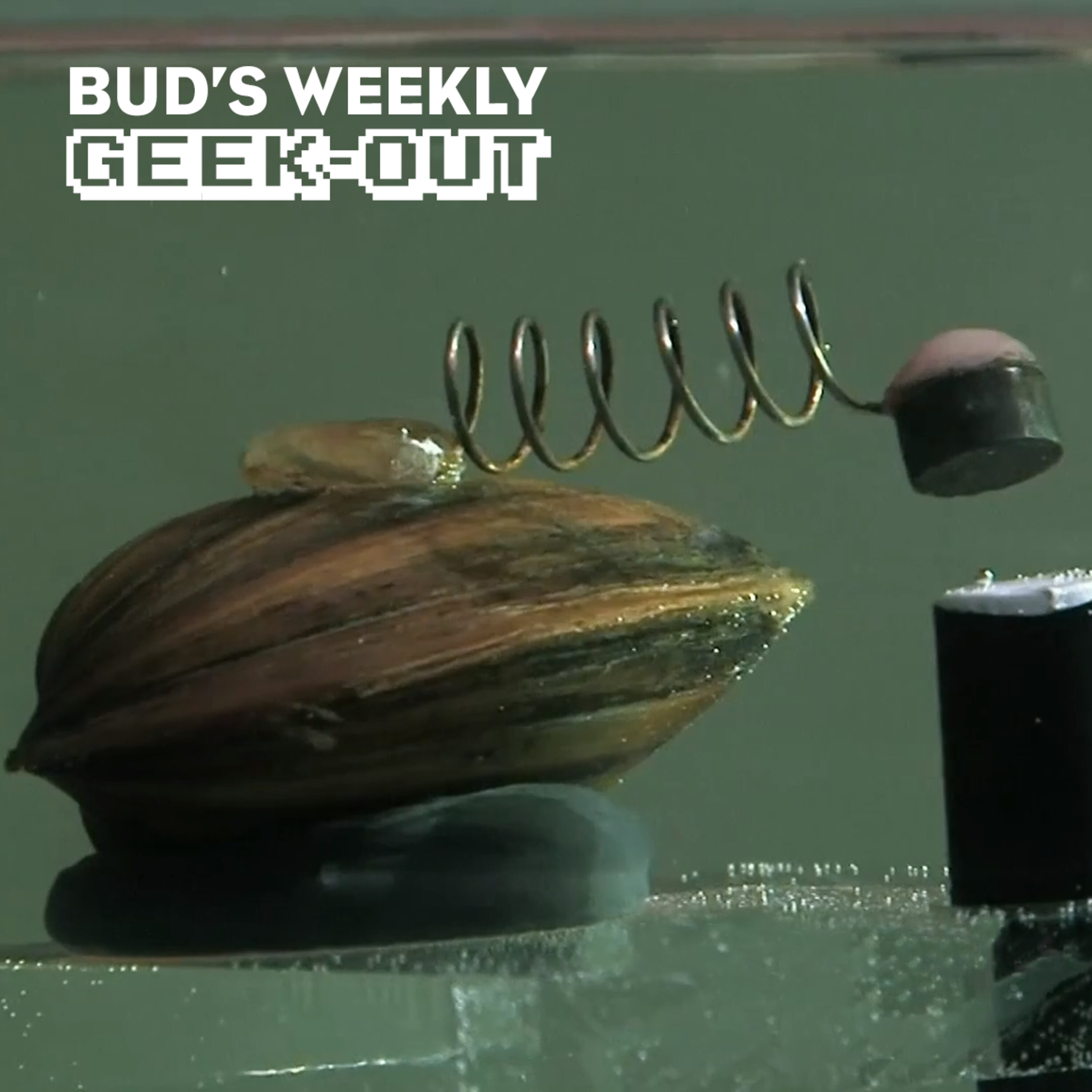 Bud's Weekly Geek-out! 20210609 - pollution-detecting clams