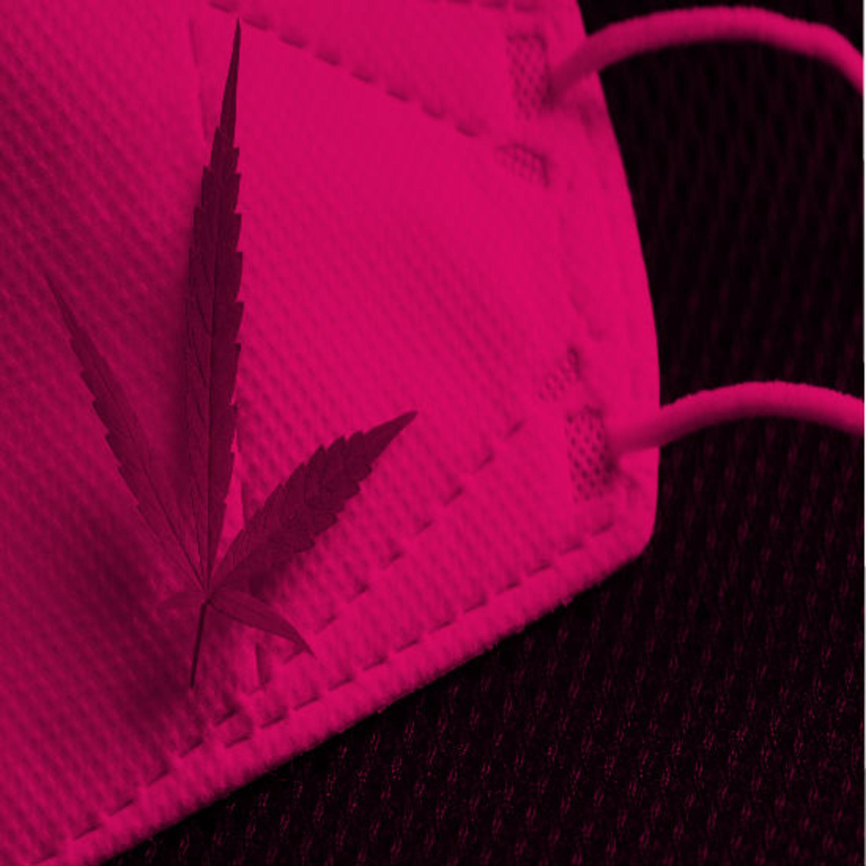 """ביה""""ס 'שלושה שיודעים': האם שימוש בקנאביס עשוי לסייע לחולים קשים בקורונה?"""