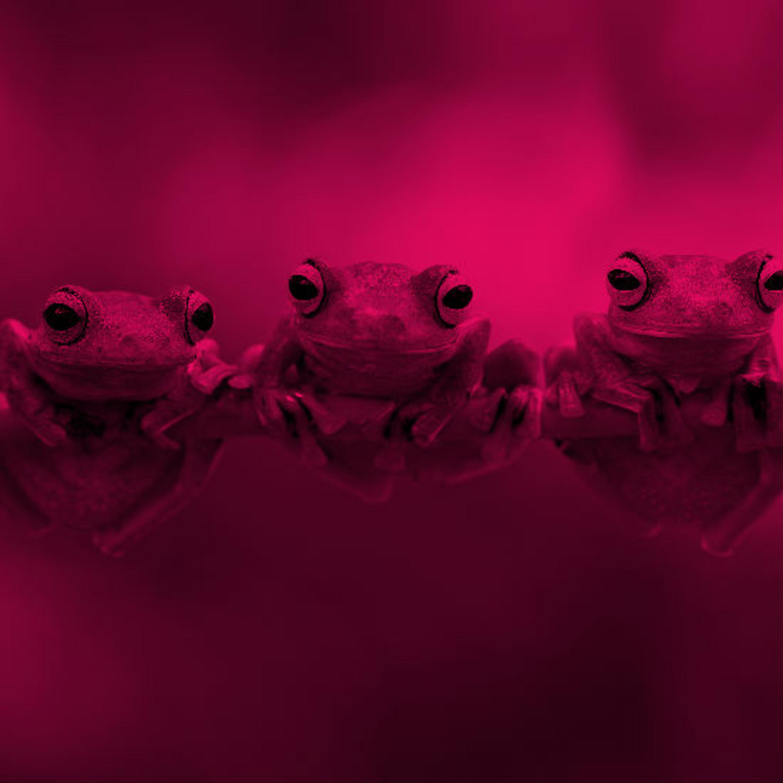 צפרדעים פוליאמוריות