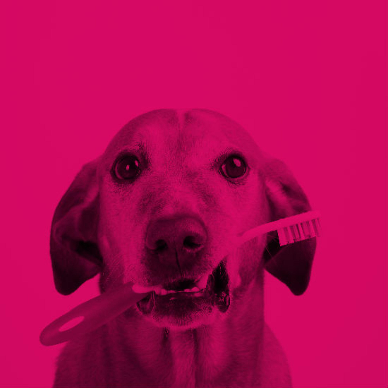 """ביה""""ס 'שלושה שיודעים': האם גם לבעלי-חיים יש חורים בשיניים?"""