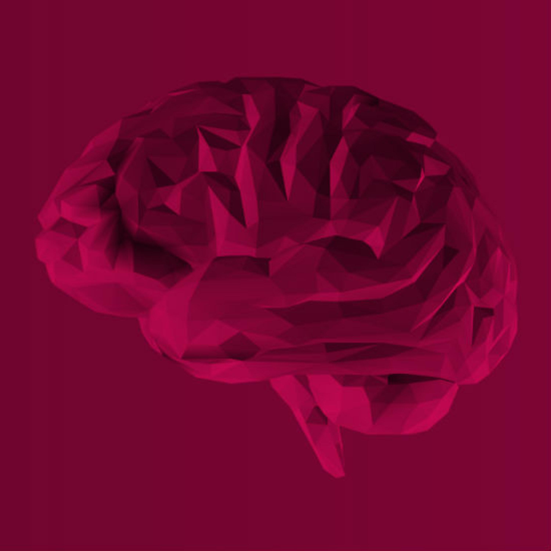 כיצד המוח שלנו יודע אילו חוויות נרצה לזכור לטווח הארוך?