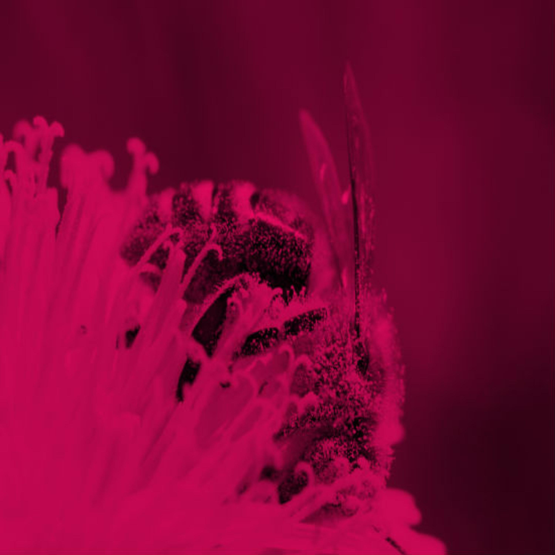 מחקר מגלה: איך נוצרו צמחים טורפים