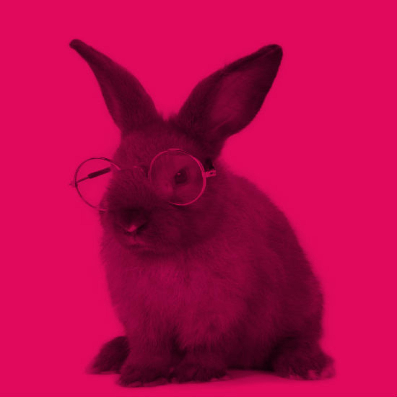 """ביה""""ס 'שלושה שיודעים': למה לארנבים יש אוזניים גדולות?"""