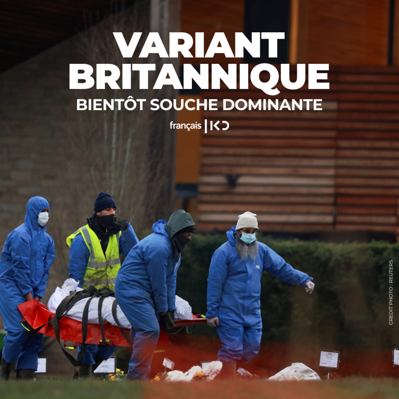 Le variant britannique, bientôt souche dominante