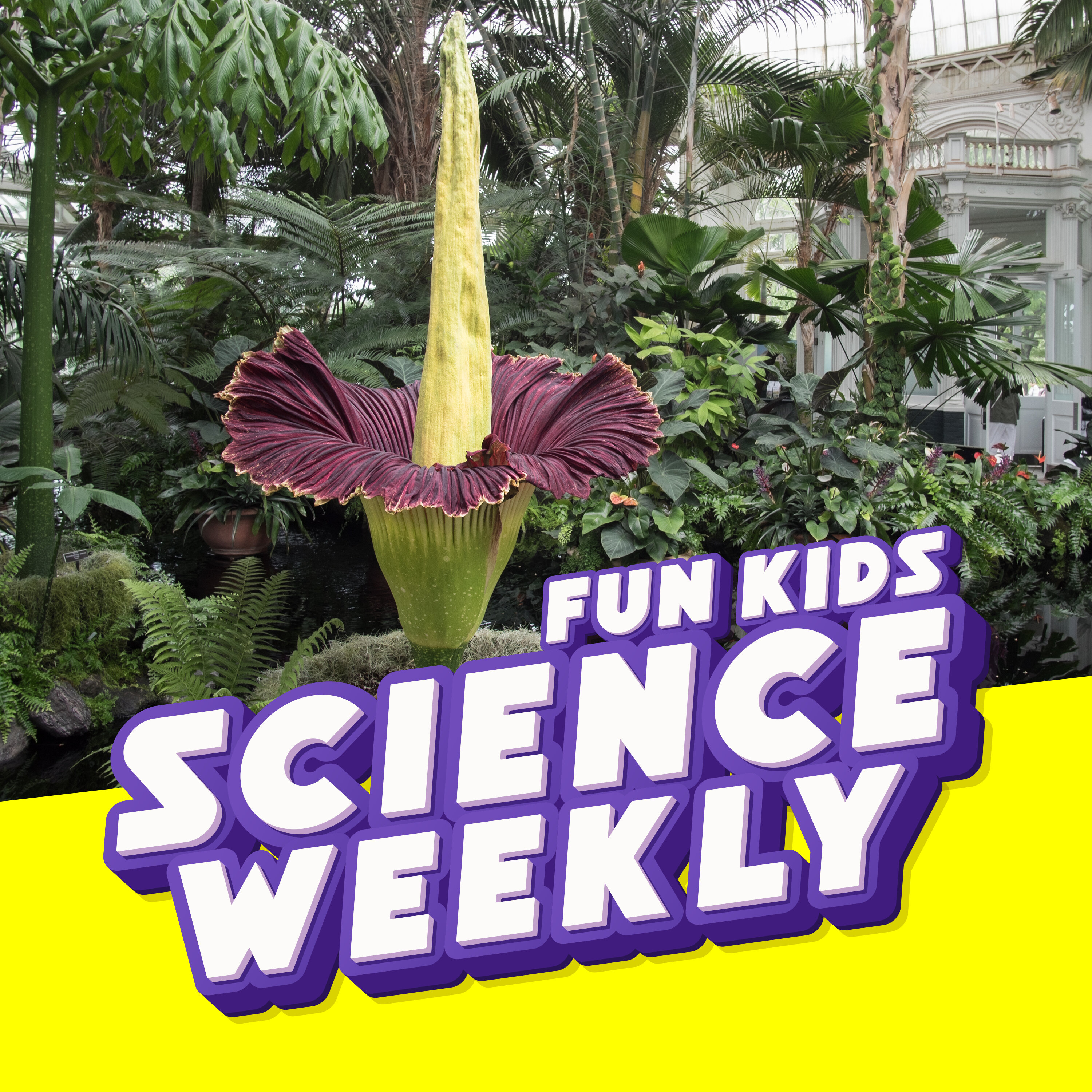 The Corpse Flower and Ying Wan Loh!