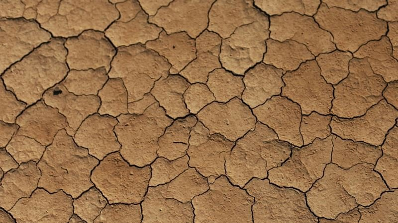 Agribusiness Australia CEO says drought media circus not helping farming industry