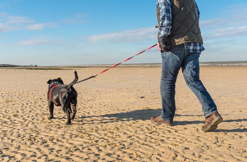 Do You Put Your Dog On A Lead At The Beach? / Do You Not Know The Words To The Australian Anthem?