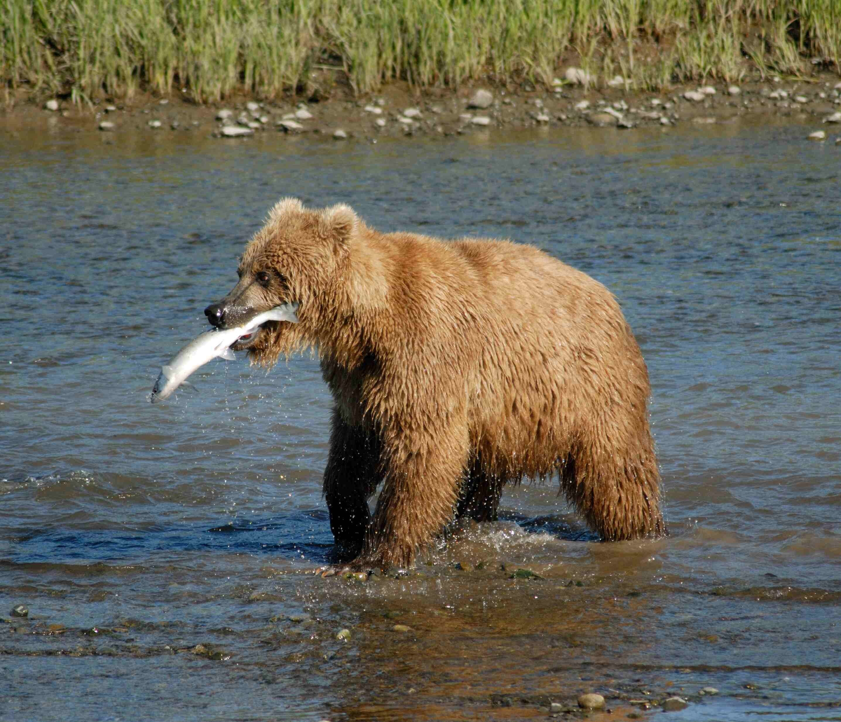 2GO Summer Breakfast - A wildlife centre are offering to name a salmon for your ex, then feed it to a bear | What fell on your head while you were sleeping? | Akmal Saleh