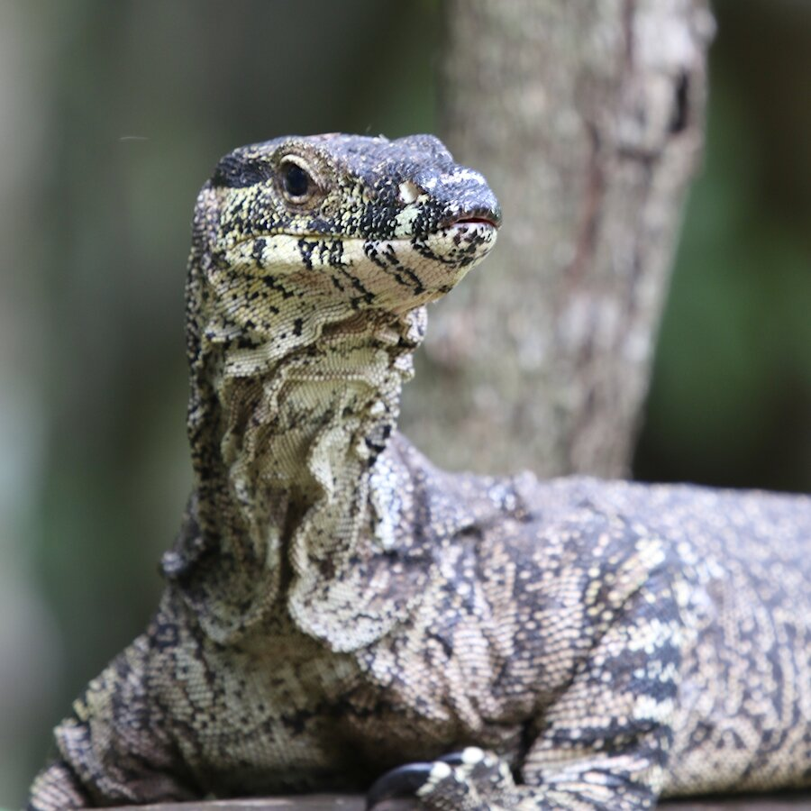 2GO Summer Breakfast - Attacks by an aggressive goanna have landed a man and the paramedic who came to help him in a Queensland hospital | Valentines Day was a busy day for Mandy and Producer Allan | A study has revealed some men need to poop completely naked