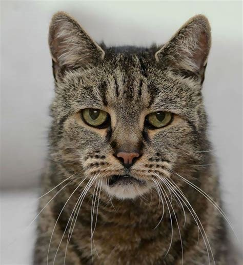 Someone in THE SOUTHWEST has a 27 YEAR OLD CAT!! Do you kow who she is???