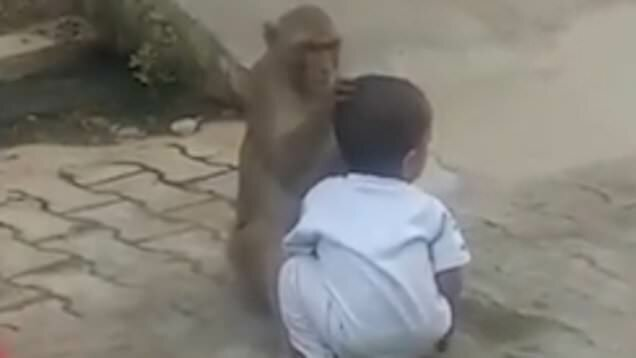 What's gone Viral - Monkey forces toddler to play with him after kidnapping him