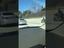 What's Viral - Hilarious dog running on highway in ontario Canada