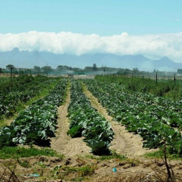 Philippi Horticultural Area