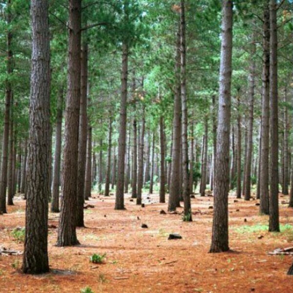 Can a Billion trees save the planet?