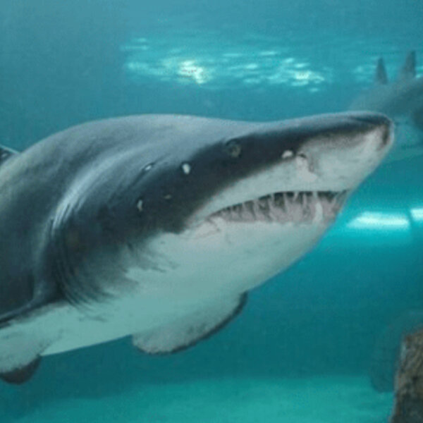 Shark and Ray Symposium