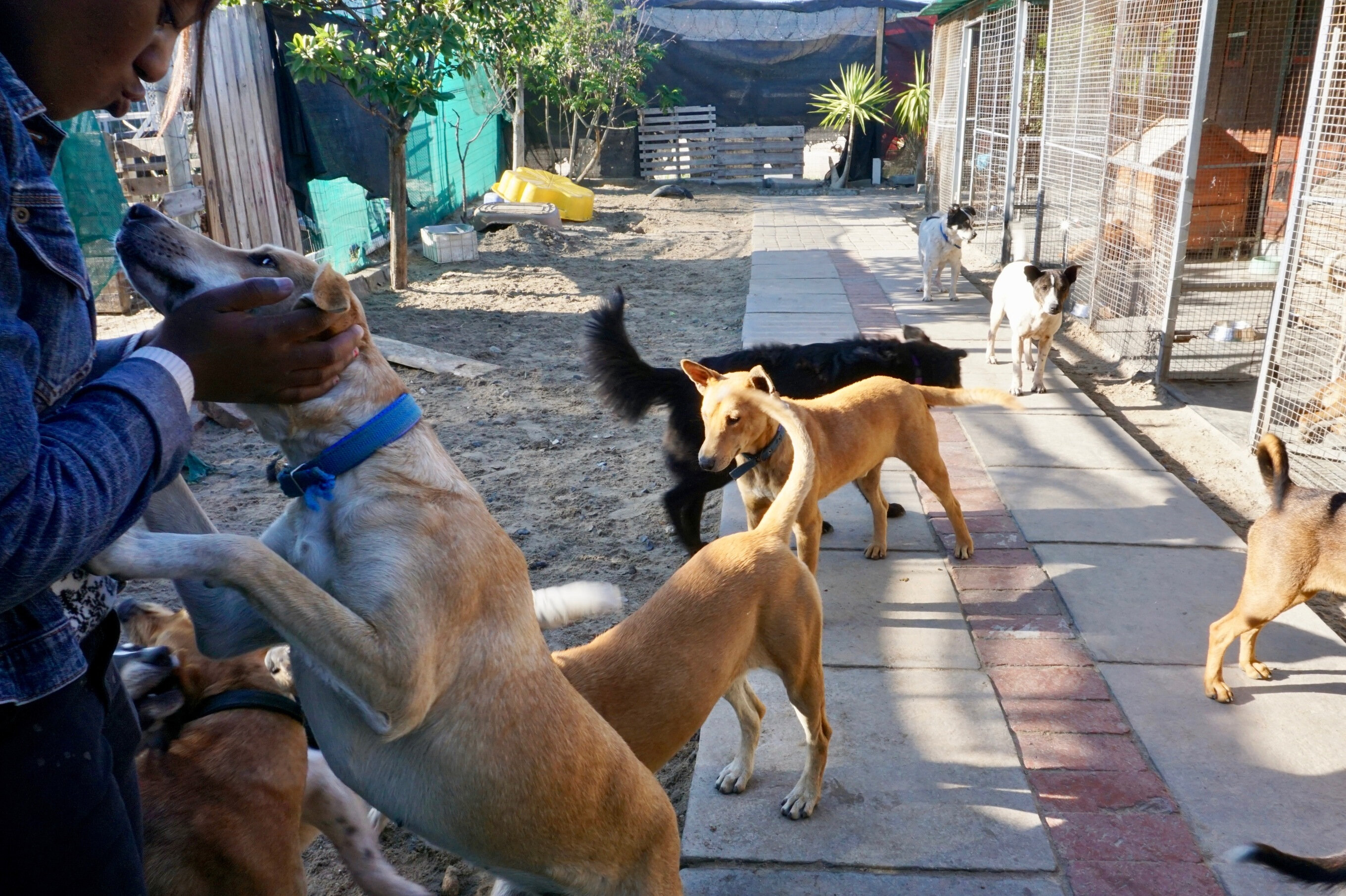 Doomed dogs saved