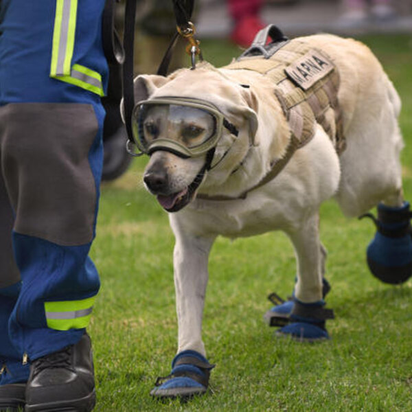 Barbs Wire - Frida, the heroic Mexican rescue dog, retires