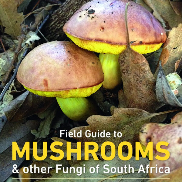Foraging for Mushrooms made easier with field guide for South Africa