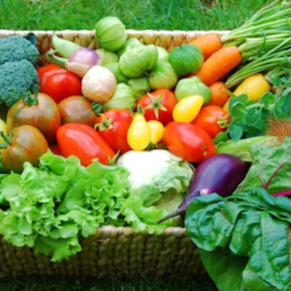 Keeping your Organic Food Garden Healthy During the summer