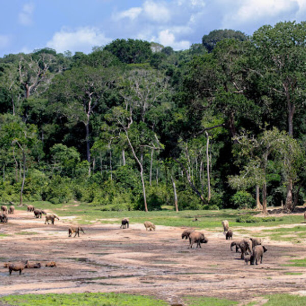 Travel & experience the wonder of the Congo Basin