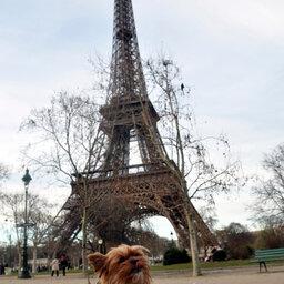 As curiosidades de Paris