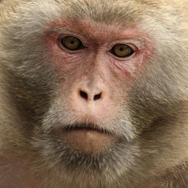 Estudos em macacos se mostram promissores com vacina e imunização