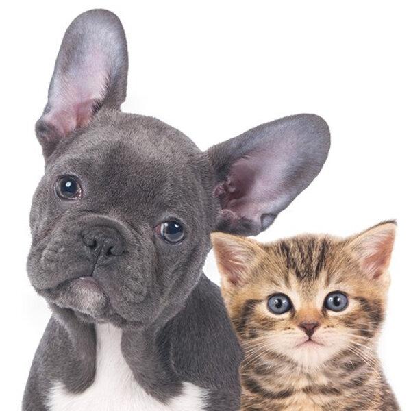 Aumento de adoção de cães e gatos na quarentena