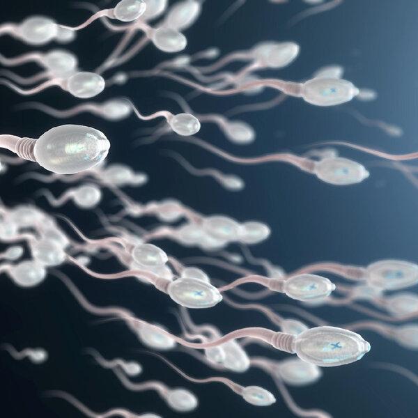 Pra onde vai o esperma quando ficamos muito tempo sem ejacular?