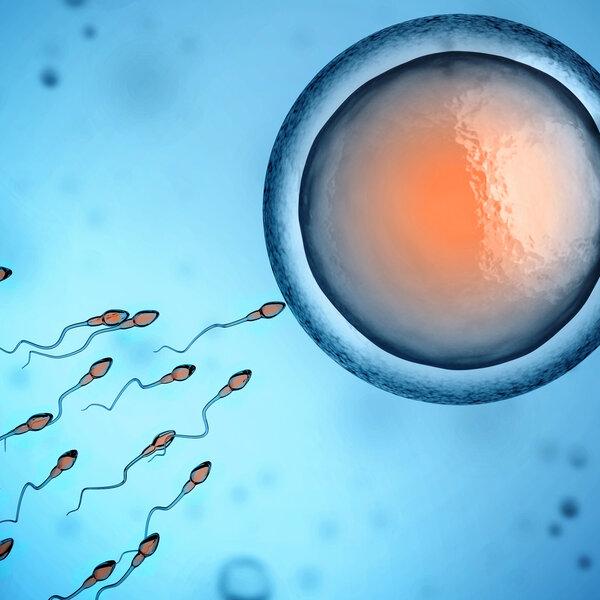 Tem sangramento quando o espermatozoide entra no óvulo