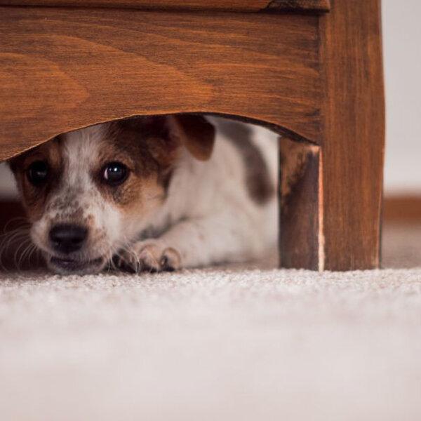 Barulhos são extremamente desagradáveis aos cães e gatos