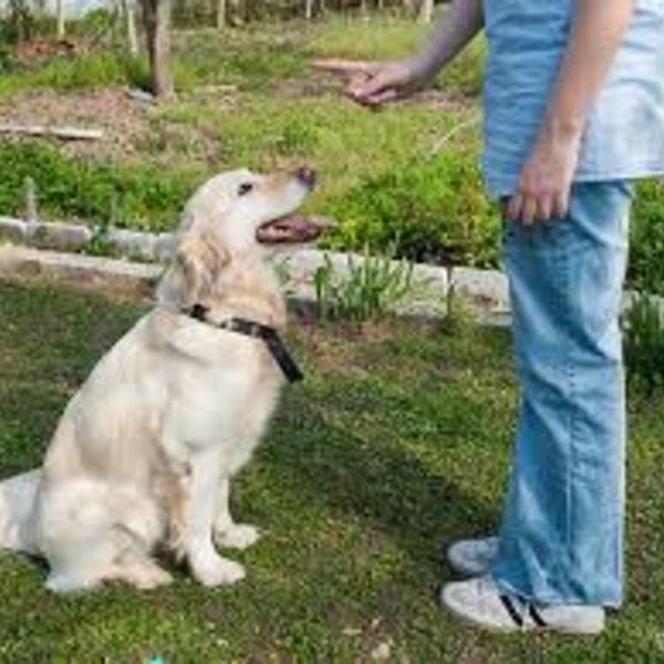 Você chama o seu cachorro e ele não obedece? Saiba o que pode ser!