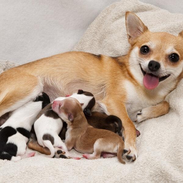 Hoje é Dia do Obstetra... Vamos falar um pouco sobre os partos das gatas e das cadelas?