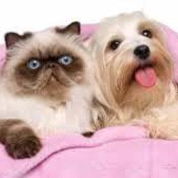 Dia Nacional da Luta conta o Câncer de Mama para cães e gatas também!