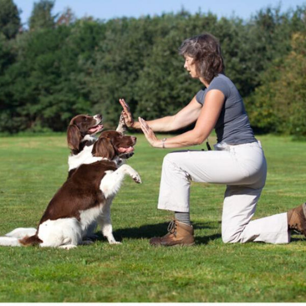 A importância do treinamento positivo na hora de adestrar seu animal