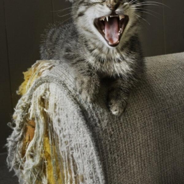 Seu gato tem um arranhador bem posicionado e continua arranhando seu sofá?