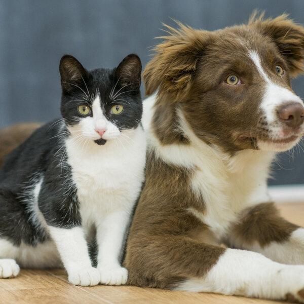 A alteração comportamental do seu pet tem tratamento