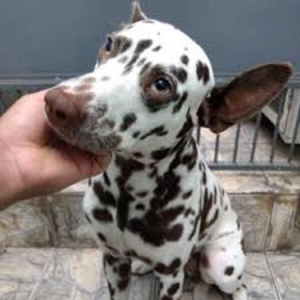 Para educar nossos animais, sejam eles tímidos ou reativos, apostem na gentileza