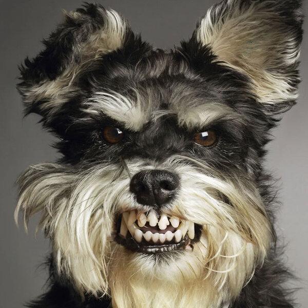 É possível que um cão seja bipolar?