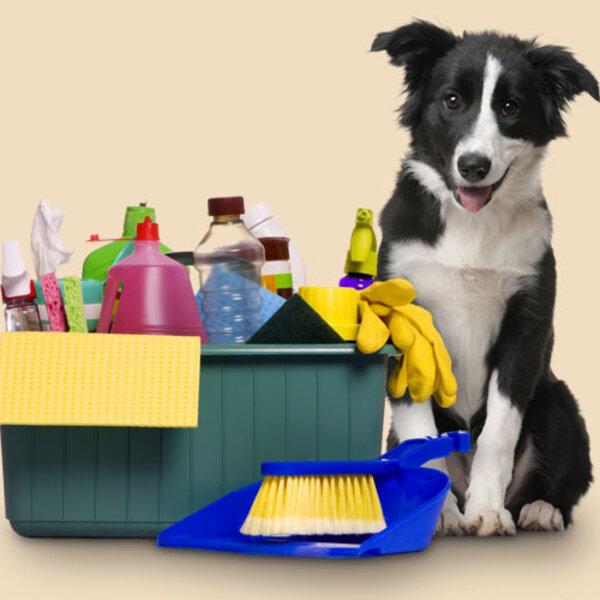 Cuidado com os produtos de limpeza que você usa na sua casa. Seu pet agradece.