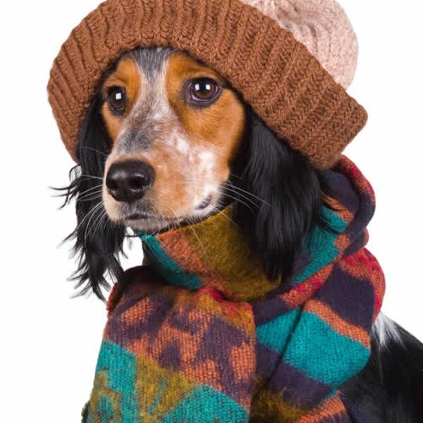 Você sabia que, mesmo em dias frios, não é necessário usar tantos agasalhos no seu animal?