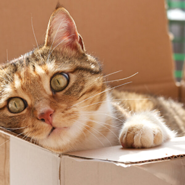Você sabia que cães e gatos adoram esconderijos e entrar em caixas, sacolas ou se esconder debaixo da mesa?