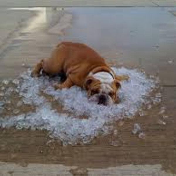 Atenção redobrada com seu pet no verão!