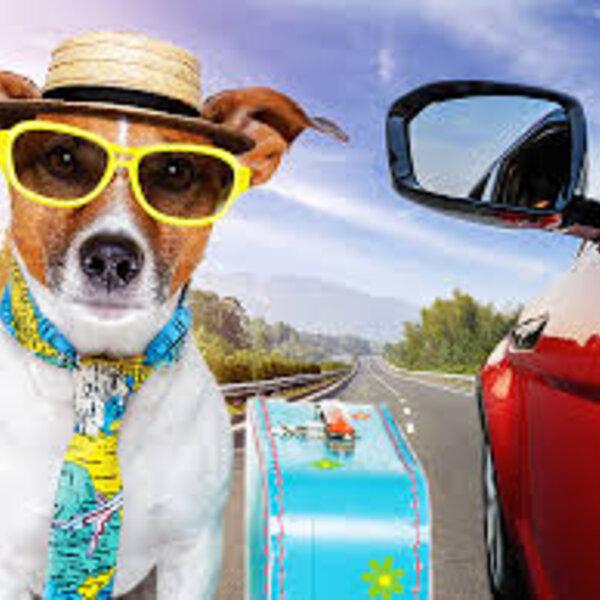 Transforme as viagens e saídas de carro com seu animal em algo prazeroso para ele