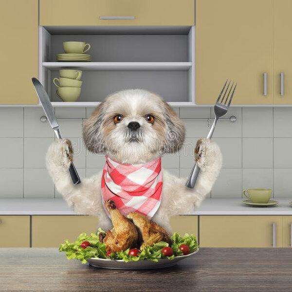 Seu cachorro não quer mais comer ração?