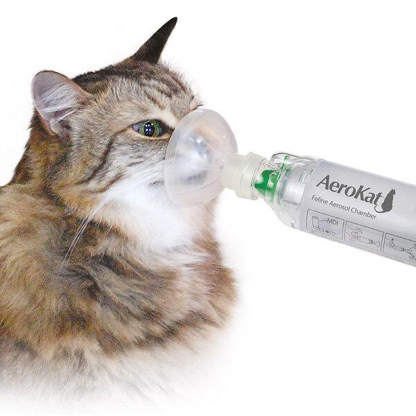 Hoje, 4 de maio é o Dia Mundial de Combate à Asma. Você sabia que os gatos também podem apresentar quadros de asma?