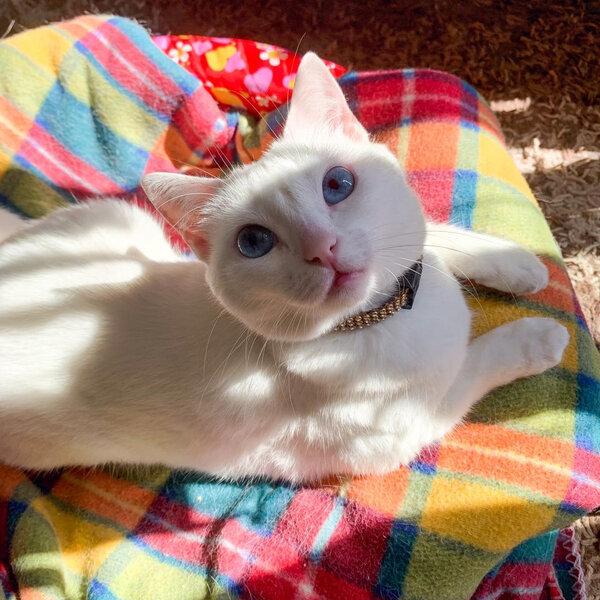 Você sabia que ontem foi Dia Internacional do Gato?