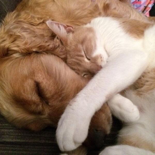 Os sentidos dos cães e gatos