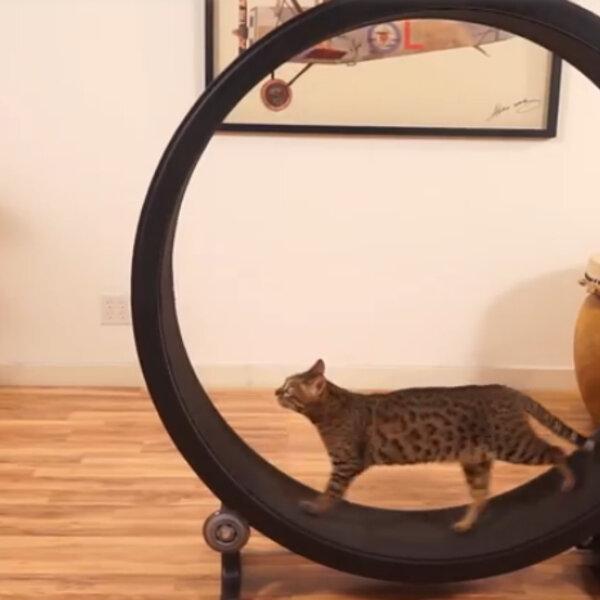 Exercícios para gatos