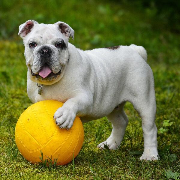 Saiba mais sobre enriquecimento ambiental para seu pet