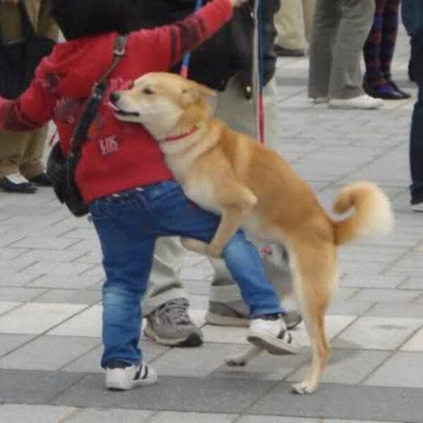Somente os cachorros montam e fazem xixi de pata levantada?